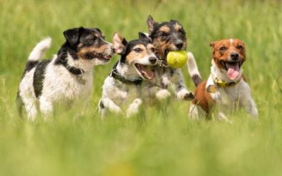 "Buy 10 ""Small Dog"" Stocks to CRUSH the Market"